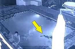 Cá Sấu đột nhập hồ bơi chờ cơ hội tấn công